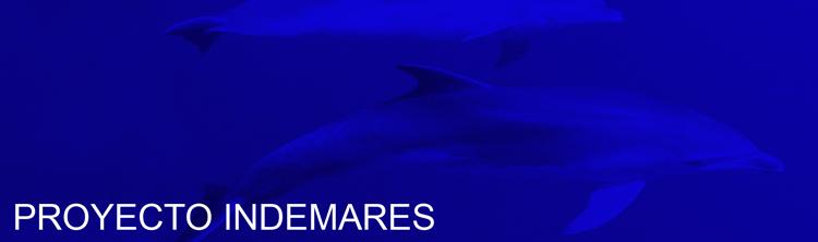 fondo azul y delfines