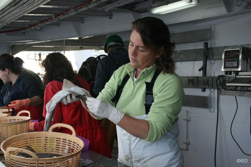 Caleli Burgos procesando los muestreos ©IEO