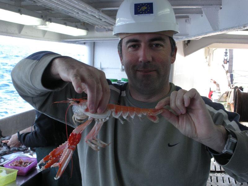 El Jefe de Campaña muestra orgulloso el tamaño de las cigalas ©IEO
