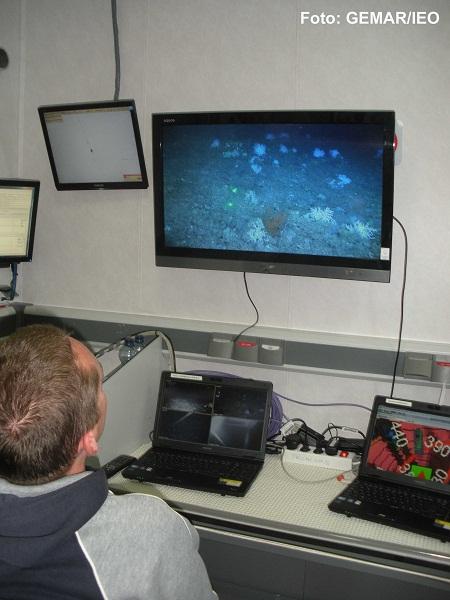 El Dr. José Luis Rueda Ruíz se deleita en la contemplación de las imágenes de video de alta resolución en las que aparecen una gran cantidad de corales y esponjas, constituyendo un verdadero reducto virgen fuera del alcance de los arrastreros que faenan a