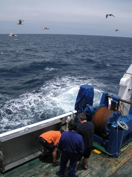 Las gaviotas son permanente acompañamiento a lo largo de la navegación, e incluso en puerto. La marejadilla se hace notar en el día de hoy aunque todavía nos permite continuar con el trabajo ©IEO