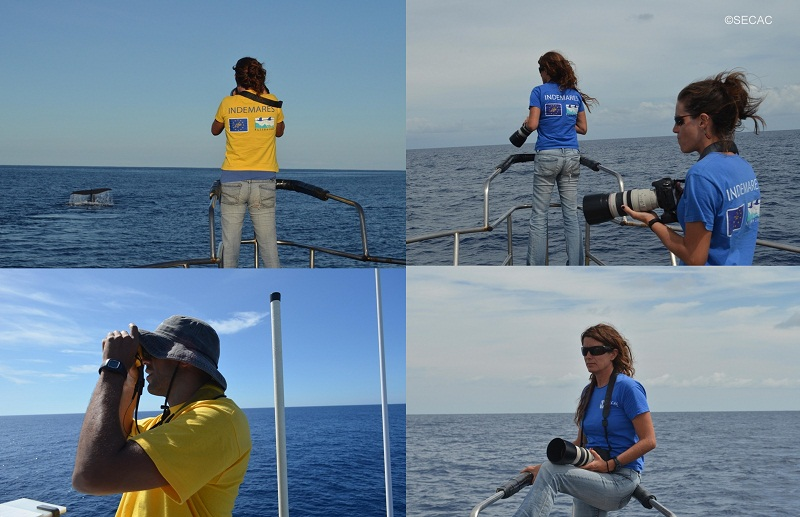 Fotoidentificación y búsqueda de cetáceos ©SECAC