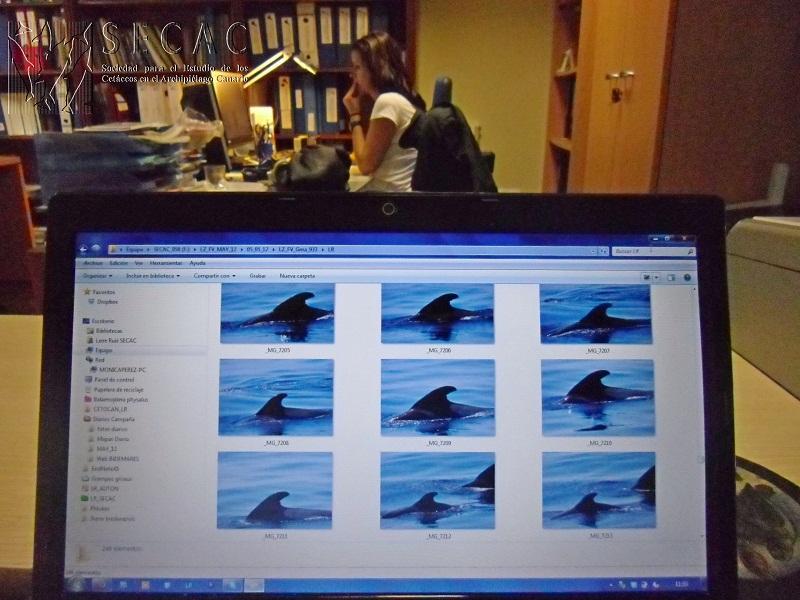 Trabajos de fotoidentificación en la oficina de la SECAC ©SECAC