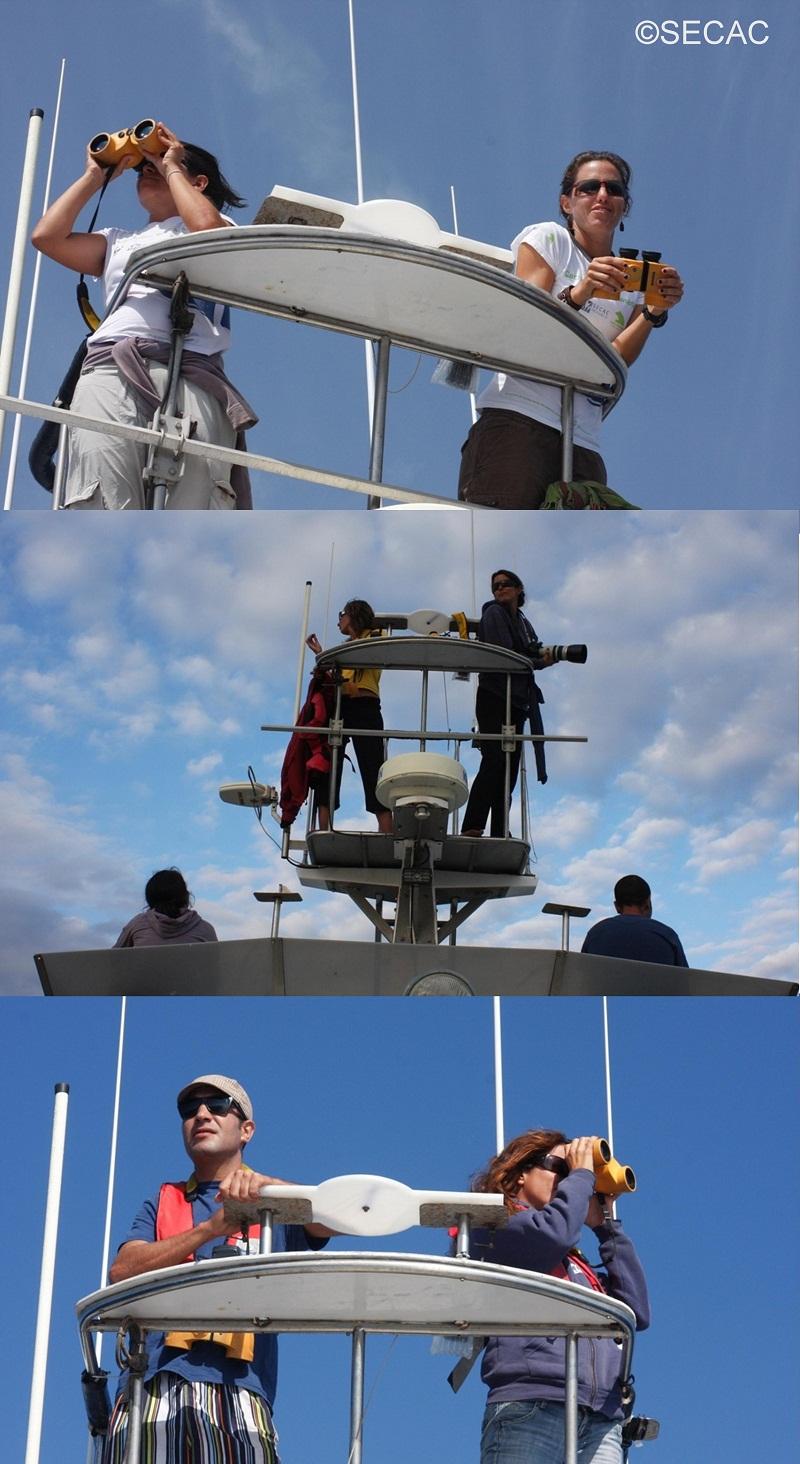 Varios momentos en la torre de avistamientos ©SECAC