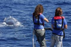 Avistamiento marcación de cetáceos © SECAC