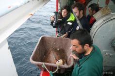 Liberando la torutuga boba catalogada como Basteira 01-2010 ©CEMMA