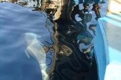 Los dispositivos CPOD en la piscina de los delfines del Oceanográfico / The CPOD device in the dolphin's pool in the Oceanographic ©Alnitak