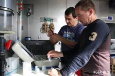José Luis Rueda y Melo González, los especialistas en Bentos del Grupo GEMAR, calibran los equipos científicos antes de realizar la analítica en las muestras de box corer ©IEO