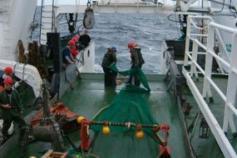 Beam trawl desplegado sobre la cubierta ©IEO