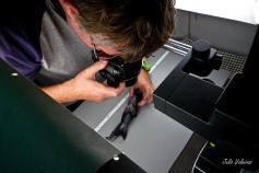 Rafa Bañón examinando una quimera del género (Hydrolagus)