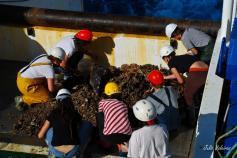 Separación de la muestra de draga de roca en la cubierta del BO Miguel Oliver