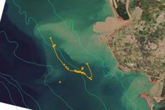 La desembocadura del río Guadalquivir ofrece el espectáculo de las plumas de turbidez. Transportan una importante carga de material (sedimentos y materia orgánica, principalmente), que es posteriormente depositada sobre el fondo marino ©IEO