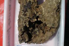 Muestra de la chimenea carbonatada autigénica que pone de manifiesto la génesis metanífera del volcán de fango Gazul ©IEO