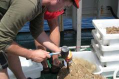 El especialista e Bentos, Dr. José Luis Rueda Ruiz, inspecciona uno de los enlosados que salido cubierto de esponjas ©IEO