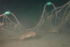 Especies de crustaceos atrapados en las redes ©ICM-CSIC