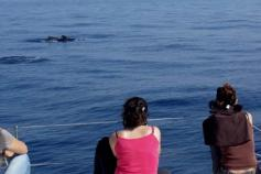 CEMMA observers taking pictures for future photo-identification during a long finned pilot whale sighting ©CEMMA