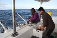Picking up the trawl hydrophone ©CEMMA