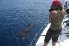 Fotoidentificación de cetáceos ©Submón