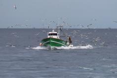 Gaviotas y barco (C) SEO/ Pep Arcos