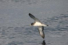© SEO/BirdLife - J.M. Arcos