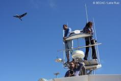Observadores en la torre de avistamientos ©SECAC